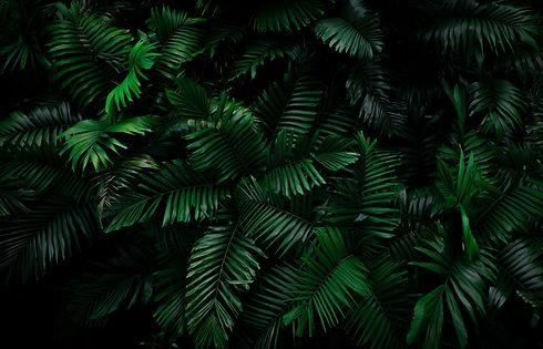 fern-leaves-dark-background-jungle-dense