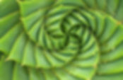 15-Plants-That-Teach-Us-Sacred-Geometry-