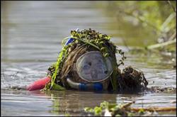 Bog Snorkelling (Monaghan)