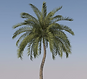 palm-avatar.png