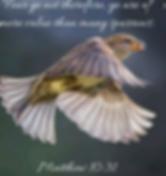 Screen Shot 2020-06-18 at 8.21.57 PM.png
