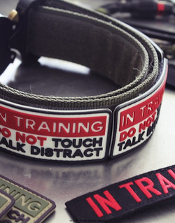 patch-in-training4