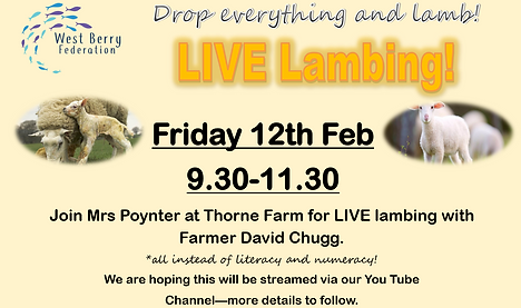 Live lambing poster.png
