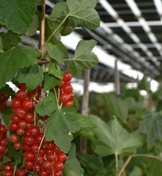 Agrivoltaico.png