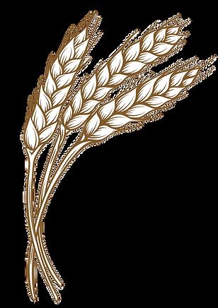 Wheat Spiga x3.png