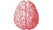 Neuroscientist Review