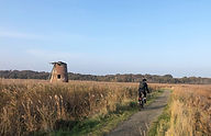 Southwold-cycle-hire-reedbeds.jpg