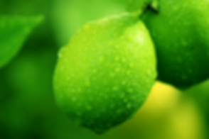 lime on tree.png