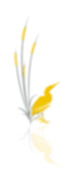 LOGO_BULLRUSHES_YELLOW_GREY_v2.png
