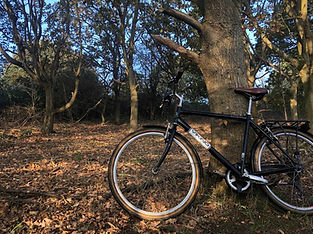 Southwold-cycle-hire-woods.jpg