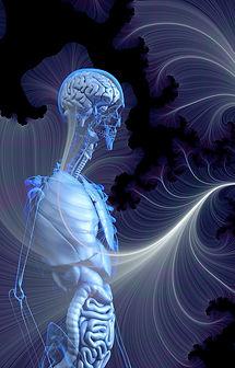 anatomy-4033242_1920.jpg