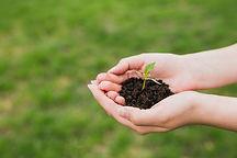 handen-met-kleine-plant_23-2147807259.jpg