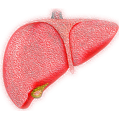 liver-4081243_1920.png