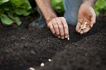 7261-zaadjes-planten.jpg