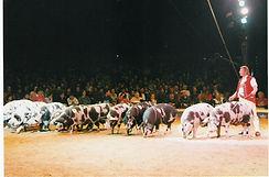 Cochon 1999 copie.jpg