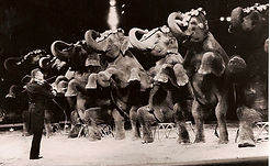 Knie 95 elephants.jpg