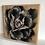 Thumbnail: Rose Block