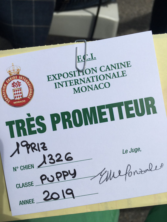 Lilli BOB-puppy at Monaco IDS 4.5.2019