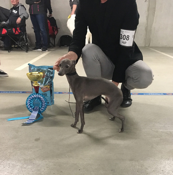 Lilli won BIG-2 at Vappy Puppy Show!