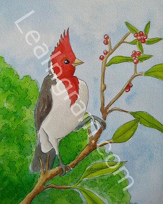 Brazilian Cardinal