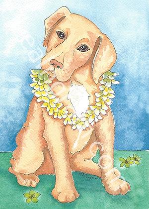 Aloha Pup