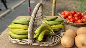 How to ripen green bananas