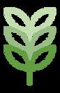 Cannabis Adult Education
