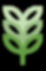 Pianta verde
