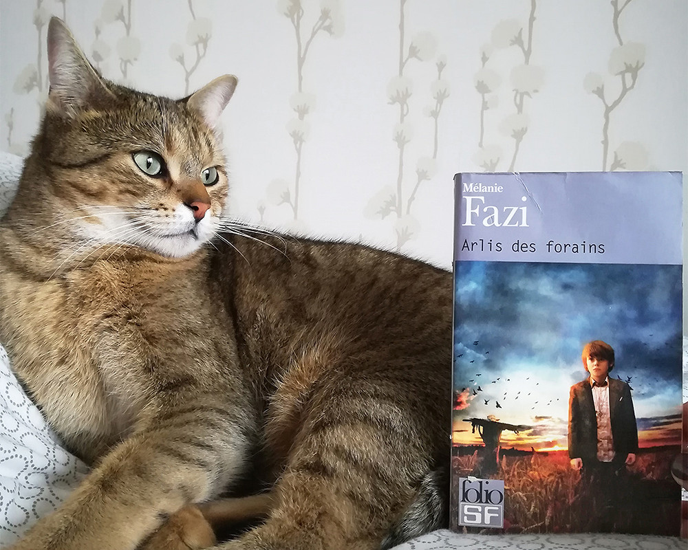 Cajou, a fierce-looking tabby cat, is sitting on a bed next to a copy of the book, whose covers show a young boy in a field, with a scarecrow in the background.