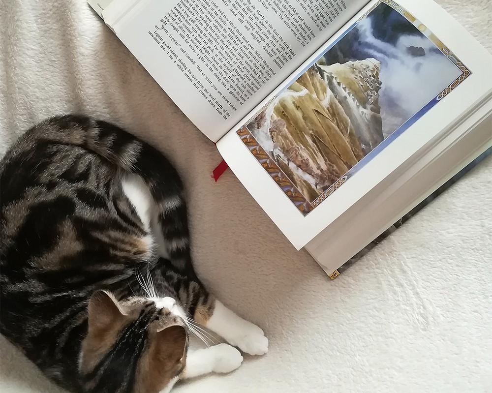 une édition en un volume du Seigneur des Anneaux sur un lit, avec un chat qui dort à côté.