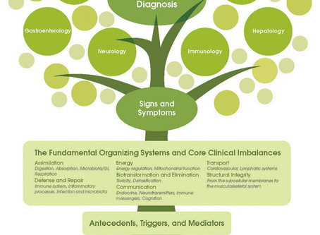 Science and the Individual: The Principles of Functional Medicine
