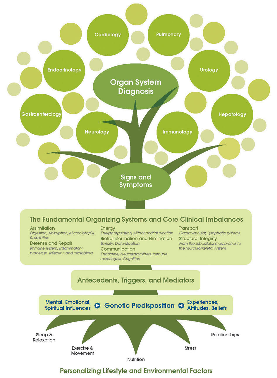 Science and the Individual: The Principles of Functional Medicine by Dr. Erin Stefanacci