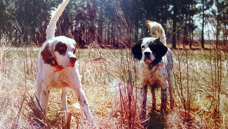 2 hunting dogs