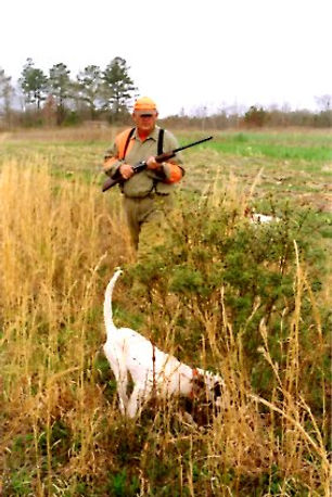 hunter with English Setter bird dog on point