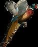 illustration of Pheasant in flight