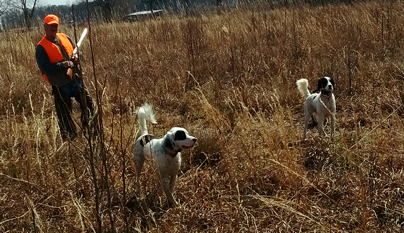 hunter and 2 English Settters