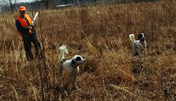 dogs and hunter in the field