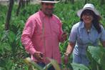 Gina & Carlos auf der Tabakplantage