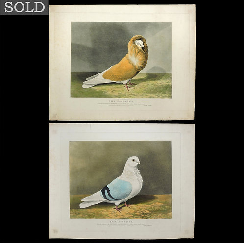 Two Victorian Hand Coloured Aquatints of Pigeons after Dean Wolstenholme