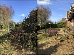 Trowbridge garden cut back
