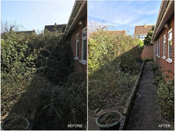 Hedges cut back and tidied