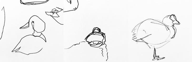 Sketching Ducks