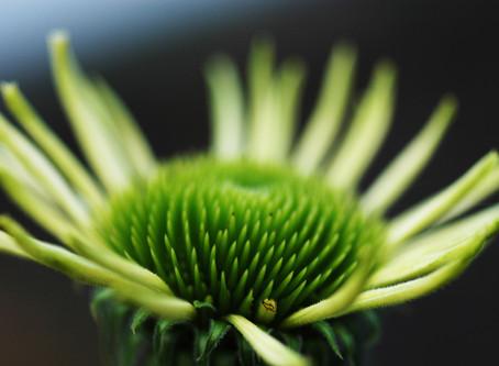 Im Einklang der Natur neue Kräfte schöpfen.
