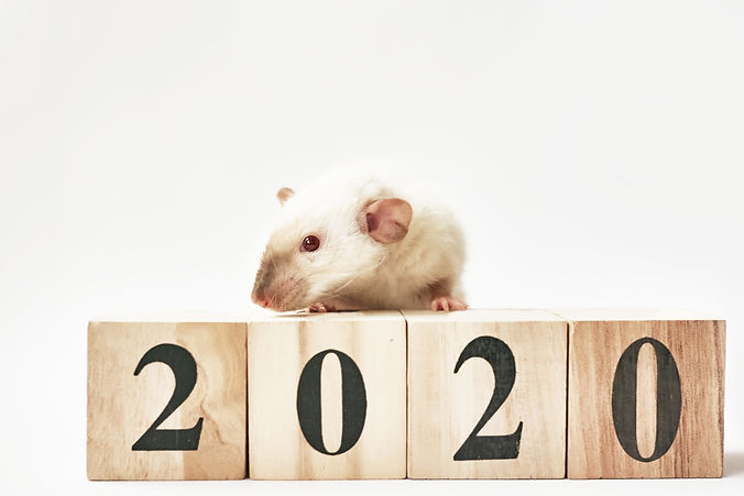 Christmas rat Symbol of the new year 202