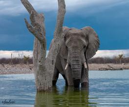 Elephant FB-3.jpg