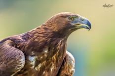 Greifvogelpark_FB--7.jpg