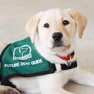 Pet Valu Walk for Dog Guides