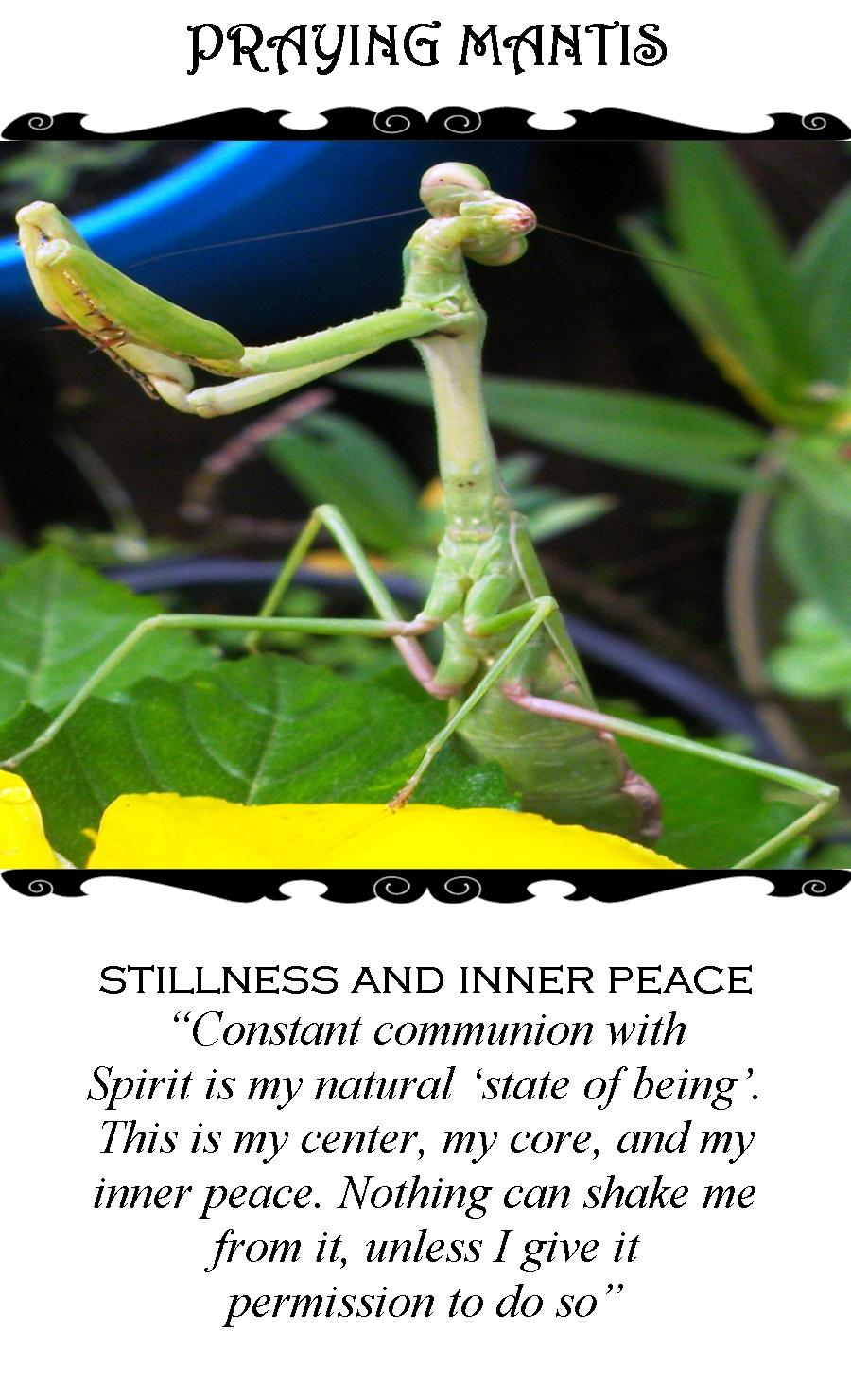 Praying Mantis/The Hermit (Tarot Link)
