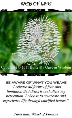 Web of Life/The Wheel of Fortune (Tarot Link)