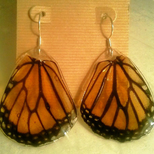 Monarch (hind wings)